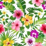 Τροπικά λουλούδια και φύλλα στο άσπρο υπόβαθρο seamless διάνυσμα διανυσματική απεικόνιση