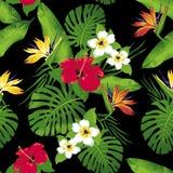 Τροπικά λουλούδια και φύλλα στο μαύρο υπόβαθρο Στοκ εικόνα με δικαίωμα ελεύθερης χρήσης