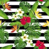 Τροπικά λουλούδια και φύλλα στο υπόβαθρο Στοκ εικόνες με δικαίωμα ελεύθερης χρήσης