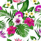 Τροπικά λουλούδια και φύλλα στο υπόβαθρο Στοκ Εικόνα