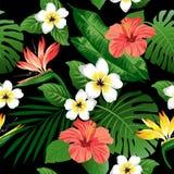 Τροπικά λουλούδια και φύλλα στο υπόβαθρο Στοκ Εικόνες