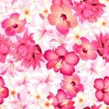 Τροπικά λουλούδια με το ρόδινο άνευ ραφής σχέδιο υποβάθρου Στοκ Φωτογραφία