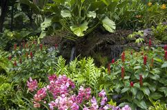 Τροπικά λουλούδια στο βοτανικό κήπο Σινγκαπούρη Στοκ Φωτογραφίες