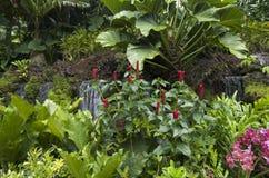 Τροπικά λουλούδια στο βοτανικό κήπο Σινγκαπούρη Στοκ Εικόνα