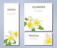 Τροπικά λουλούδια του plumeria στα πρότυπα για τις επαγγελματικές κάρτες και άλλες παρουσιάσεις ελεύθερη απεικόνιση δικαιώματος