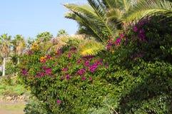 Τροπικά λουλούδια, φοίνικες και άλλες εγκαταστάσεις Η φύση είναι μια όμορφη Στοκ Εικόνα