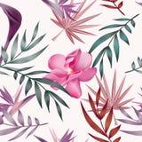 Τροπικά λουλούδια, φύλλα ζουγκλών, λουλούδι πουλιών του παραδείσου Στοκ φωτογραφία με δικαίωμα ελεύθερης χρήσης