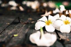 Τροπικά λουλούδια Plumeria στο ξύλο Στοκ φωτογραφία με δικαίωμα ελεύθερης χρήσης