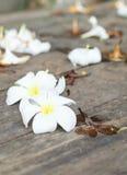 Τροπικά λουλούδια Plumeria στο ξύλο Στοκ εικόνες με δικαίωμα ελεύθερης χρήσης
