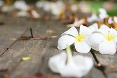 Τροπικά λουλούδια Plumeria στο ξύλο Στοκ Εικόνα