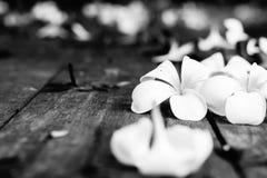 Τροπικά λουλούδια Plumeria στο ξύλο Στοκ φωτογραφίες με δικαίωμα ελεύθερης χρήσης