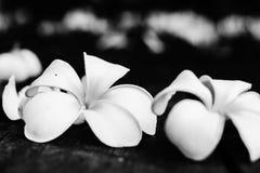 Τροπικά λουλούδια Plumeria στο ξύλο Στοκ εικόνα με δικαίωμα ελεύθερης χρήσης