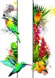 Τροπικά πουλιά με το άσπρο έμβλημα ελεύθερη απεικόνιση δικαιώματος