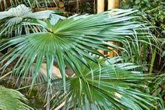 Τροπικά πράσινα φύλλα στοκ φωτογραφία