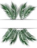 Τροπικά σκούρο πράσινο φύλλα φοινικών Θέση για τη διαφήμιση, ανακοινώσεις Σύνολο Στην άσπρη ανασκόπηση απεικόνιση Στοκ εικόνες με δικαίωμα ελεύθερης χρήσης
