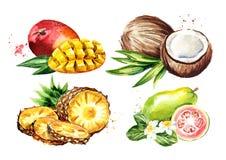 Τροπικά φρούτα καθορισμένα Μάγκο, καρύδα, γκοϋάβα, ανανάς Συρμένη χέρι απεικόνιση Watercolor που απομονώνεται στο άσπρο υπόβαθρο ελεύθερη απεικόνιση δικαιώματος