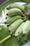 Τροπικά φρούτα μπανανών Στοκ Εικόνες