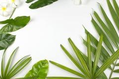 Τροπικά φύλλα και λουλούδια plumeria στο άσπρο υπόβαθρο Στοκ εικόνες με δικαίωμα ελεύθερης χρήσης