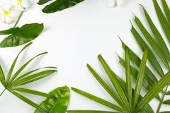 Τροπικά φύλλα και λουλούδια plumeria στο άσπρο υπόβαθρο Στοκ Εικόνα
