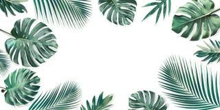 Τροπικά φύλλα που τίθενται με το άσπρο διαστημικό υπόβαθρο αντιγράφων Φύση στοκ εικόνες με δικαίωμα ελεύθερης χρήσης