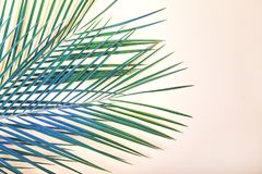 Τροπικά φύλλα στο ρόδινο υπόβαθρο κρητιδογραφιών στοκ εικόνα