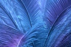 Τροπικά φύλλα τη νύχτα στοκ εικόνα