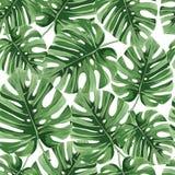 Τροπικά φύλλα φοινικών, άνευ ραφής διανυσματικό floral σχέδιο φύλλων ζουγκλών στοκ φωτογραφίες με δικαίωμα ελεύθερης χρήσης