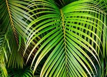 Τροπικά φύλλα φοινικών, άνευ ραφής floral υπόβαθρο σχεδίων φύλλων ζουγκλών Στοκ φωτογραφίες με δικαίωμα ελεύθερης χρήσης