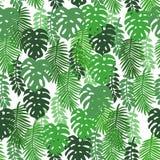 Τροπικά φύλλα ενός στα άσπρα υποβάθρου Στοκ Εικόνα