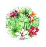 Τροπικά φύλλα, εξωτικά λουλούδια απεικόνιση κύκλων ανασκόπησης εφαρμογών πολλές χρήσιμο διάνυσμα watercolor Στοκ Εικόνα