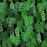 Τροπικά φύλλα σε ένα μαύρο υπόβαθρο Στοκ Εικόνες