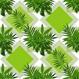 Τροπικά φύλλα σε ένα πράσινο υπόβαθρο Τα φύλλα φοινικών Στοκ Εικόνες