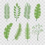Τροπικά φύλλα φοινικών και φύλλα ζουγκλών Σύνολο καθιερωνουσών τη μόδα απεικονίσεων διαφανή σε ελεγμένο Στοκ Εικόνα