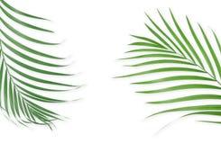 Τροπικά φύλλα φοινικών στο άσπρο υπόβαθρο Ελάχιστη φύση Καλοκαίρι απεικόνιση αποθεμάτων