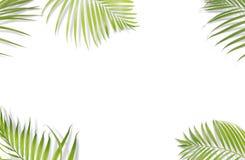 Τροπικά φύλλα φοινικών στο άσπρο υπόβαθρο Ελάχιστη φύση Καλοκαίρι διανυσματική απεικόνιση