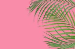 Τροπικά φύλλα φοινικών στο ρόδινο υπόβαθρο Ελάχιστη φύση Καλοκαίρι απεικόνιση αποθεμάτων
