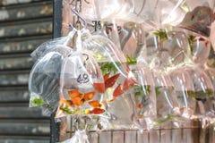 Τροπικά ψάρια ενυδρείων και plat στην αγορά Χονγκ Κονγκ goldfish Στοκ Εικόνα