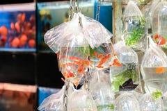 Τροπικά ψάρια ενυδρείων και plat στην αγορά Χονγκ Κονγκ goldfish Στοκ Εικόνες