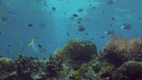 Τροπικά ψάρια κάτω από το Gold Coast Queensland Αυστραλία νερού απόθεμα βίντεο