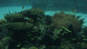 Τροπικά ψάρια κάτω από το Gold Coast Queensland Αυστραλία νερού φιλμ μικρού μήκους