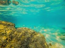 Τροπικά ψάρια και κοράλλια στη θάλασσα κάτω από το νερό Στοκ φωτογραφία με δικαίωμα ελεύθερης χρήσης