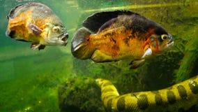 Τροπικά ψάρια και υδρόβιο φίδι Στοκ φωτογραφία με δικαίωμα ελεύθερης χρήσης