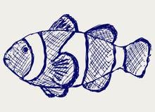 Τροπικά ψάρια σκοπέλων Στοκ Φωτογραφίες