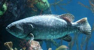 Τροπικά ψάρια στο ενυδρείο στον ωκεανό, αλατισμένο πλάσμα θάλασσας στοκ εικόνα