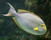 Τροπικά ψάρια 10 Στοκ εικόνα με δικαίωμα ελεύθερης χρήσης