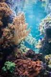 Τροπικά ψάρια στοκ φωτογραφία