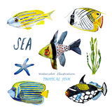Τροπικά ψάρια Watercolor απεικόνιση αποθεμάτων