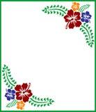 Τροπικά hibiscus λουλούδια Στοκ εικόνες με δικαίωμα ελεύθερης χρήσης