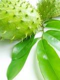 Soursop (Annona muricata) Στοκ Εικόνες