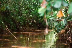 Τροπικές δασικές περιπέτειες στην Ασία Ο καταρράκτης και η κοίτη του ποταμού μετατρέπονται σε κολπίσκο στοκ εικόνες με δικαίωμα ελεύθερης χρήσης